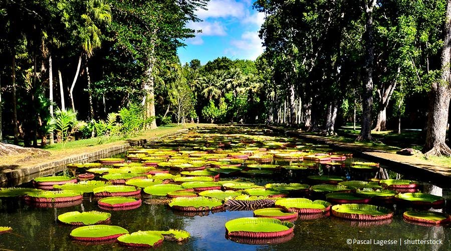 Mauritius: dal Giardino di Pamplemousses a Port Louis